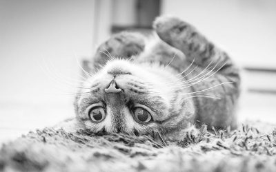 Head Pressing Cats – Understanding Cat Head Pressing, Bumping and Rubbing
